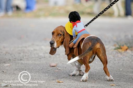 Dogs in Disguise-5dm21_0937-pr.jpg