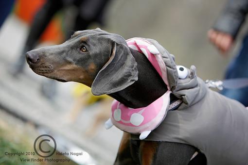 Dogs in Disguise-5dm21_1154-pr.jpg