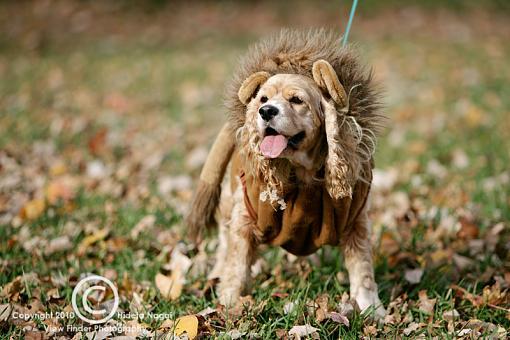 Dogs in Disguise-5dm21_1185-pr.jpg