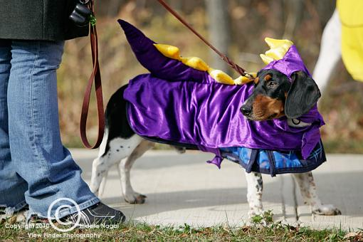 Dogs in Disguise-5dm21_1241-pr.jpg