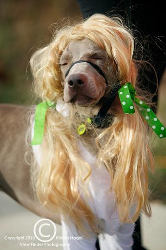 Dogs in Disguise-5dm21_1252-pr.jpg