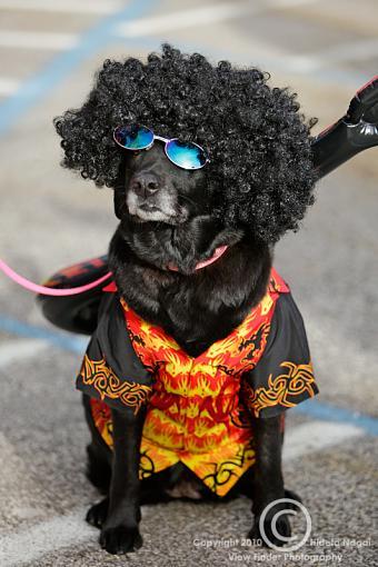 Dogs in Disguise-5dm21_1335-pr.jpg
