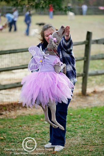Dogs in Disguise-5dm21_1000-pr.jpg