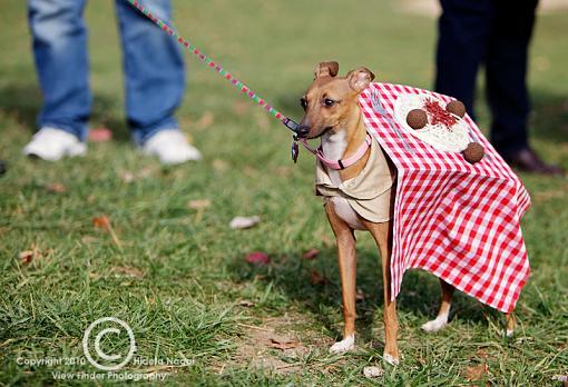 Dogs in Disguise-5dm21_1136-pr.jpg