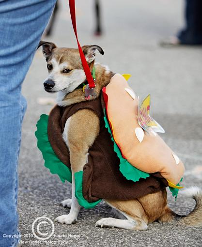 Dogs in Disguise-5dm21_1016.jpg