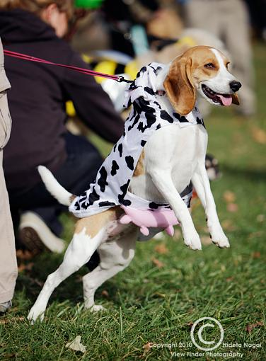 Dogs in Disguise-5dm21_1103.jpg