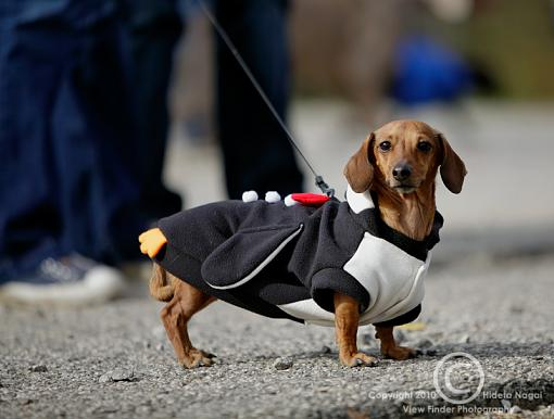 Dogs in Disguise-5dm21_1126.jpg