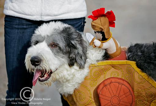 Dogs in Disguise-5dm21_1181.jpg