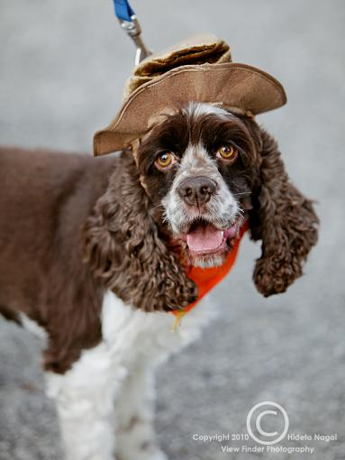 Dogs in Disguise-5dm21_1204.jpg