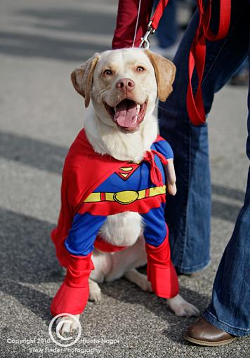 Dogs in Disguise-5dm21_1248.jpg