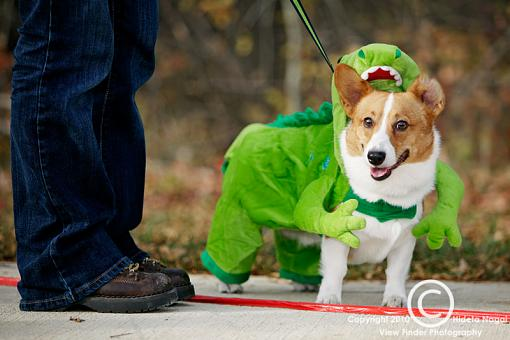 Dogs in Disguise-5dm21_1308.jpg