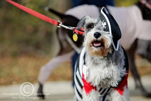 Dogs in Disguise-5dm21_1319.jpg