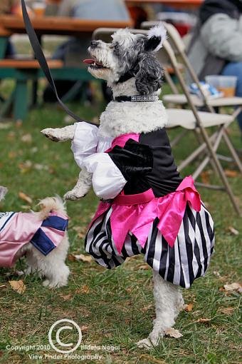 Dogs in Disguise-5dm21_0864.jpg