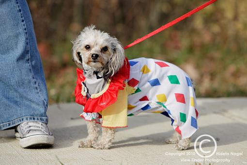 Dogs in Disguise-5dm21_1360.jpg