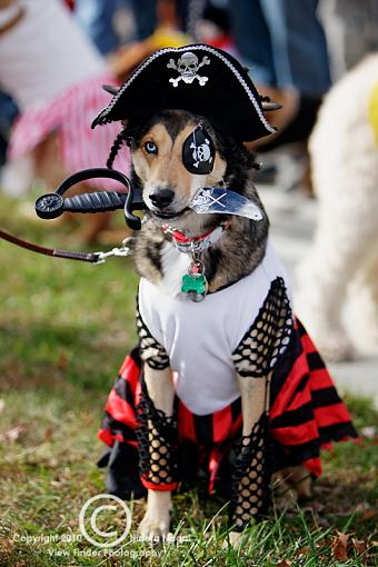 Dogs in Disguise-5dm21_1237.jpg