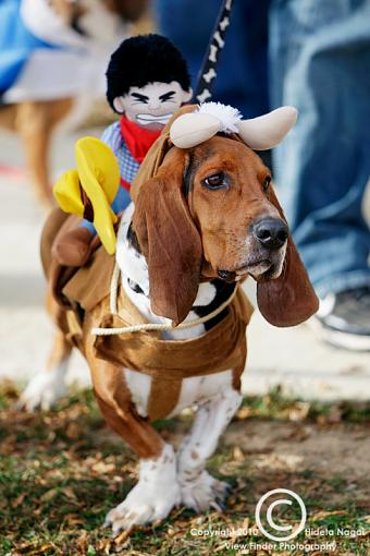 Dogs in Disguise-5dm21_1270.jpg