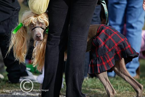 Dogs in Disguise-5dm21_1034.jpg