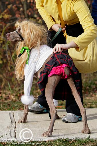 Dogs in Disguise-5dm21_1362.jpg