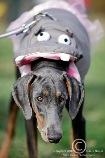 Dogs in Disguise-5dm21_1159.jpg