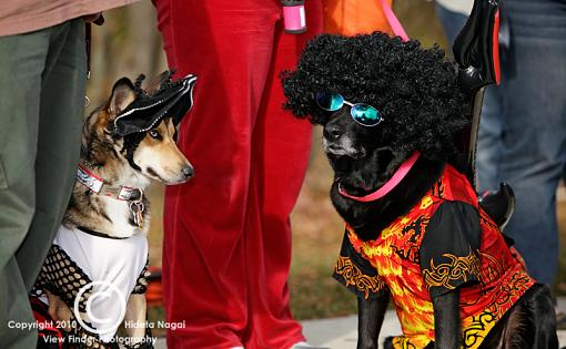 Dogs in Disguise-5dm21_1371.jpg