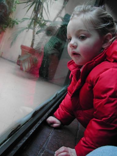*kiss*-little-girl-zoo.jpg