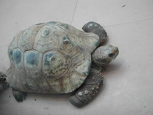 *kiss*-turtle-zoo.jpg