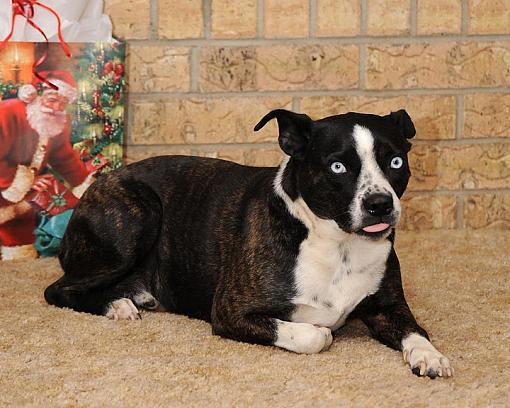 Post Images of your Dog-dsc_3857-2.jpg