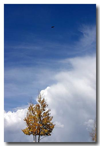 Scenes from Northern New Mexico-sbt_crow.jpg