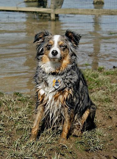 Post Images of your Dog-rocket-muddy.jpg