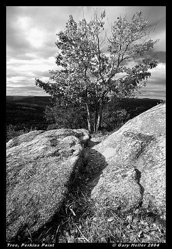 Perkins Point, N.Y.-treeonperkinspoint1004-123404xbwweb.jpg