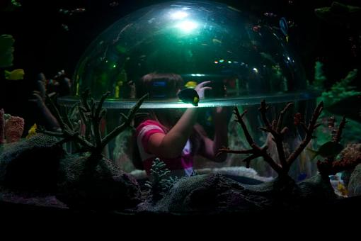 Capture a Photographer-aquarium-27-28-.jpg