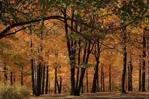 Fall colors-_mg_4335_6_7_tonemapped.jpg