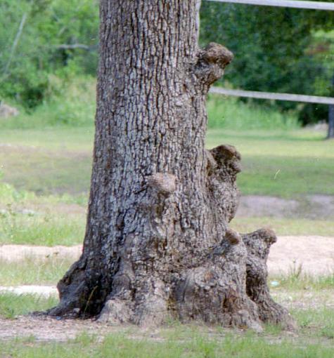Tree Critters-14688998581_1636624f6e_z.jpg