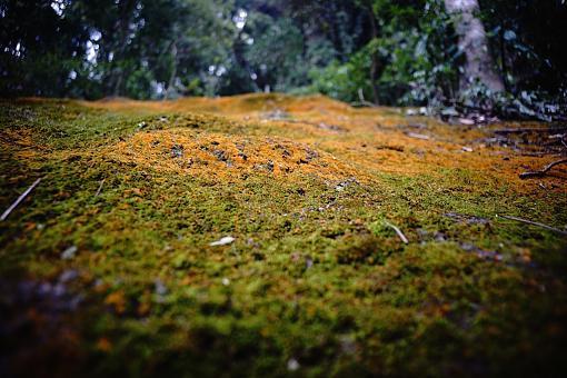 Voigtlander Nature Photos - Voigtlander 25mm f4 LTM on Sony A7-voigtlander-nature-photo-25mm-f4.jpg